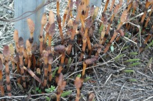 Horsetail in the crane yard