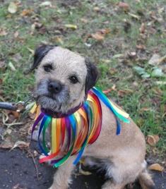 Winston in rainbow colours