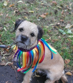 Winston in rainbow colours